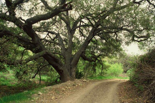 Escondido Canyon Trail