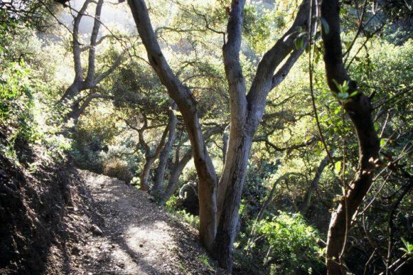 Dixie Canyon Park