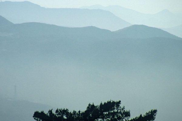 EastCanyon-fog-tree