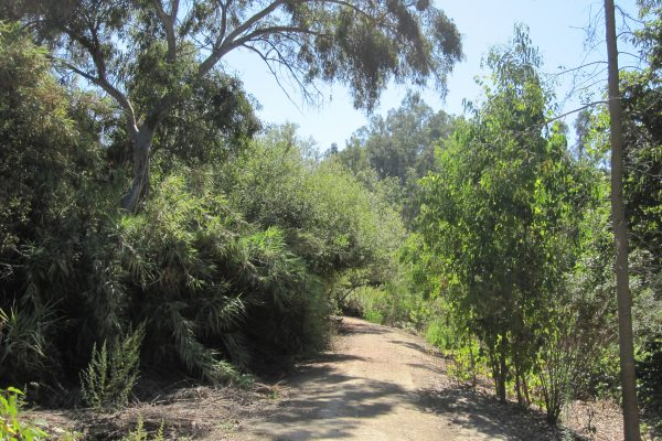 Franklin Canyon Trail