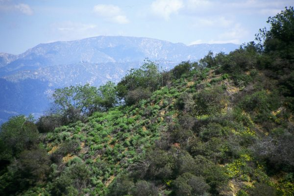 Fryman Canyon View