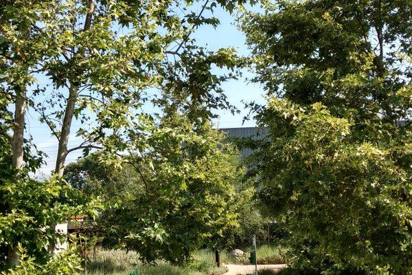 Lewis MacAdams Riverfront Park