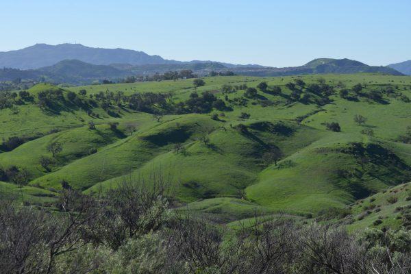 Upper Las Virgenes Open Space Preserve. Photo by Gaston Hinostroza
