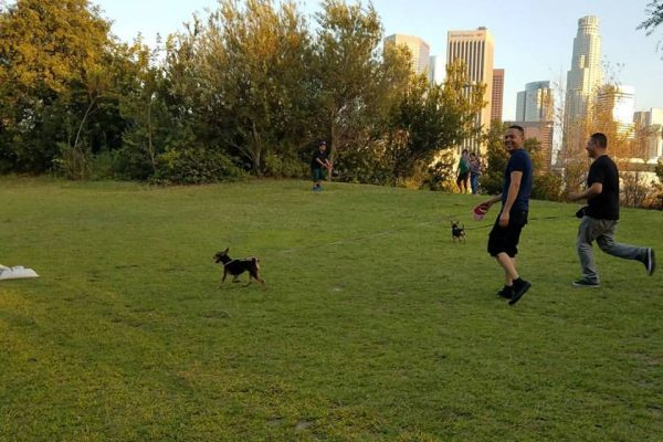 Vista park goers with dog on lawn