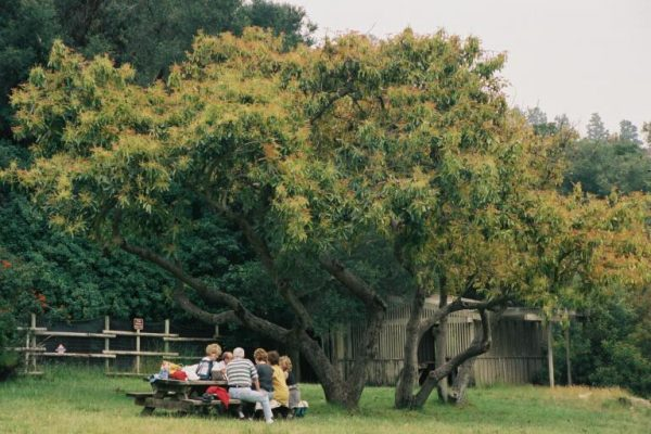 Picnic at Doheny Ranch in Franklin Canyon