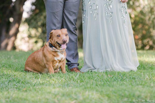 We are a doggo-friendly venue. Photo by Aurelia D'Amore Photography