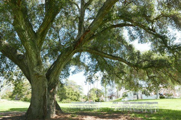 Ceremony under the oak tree