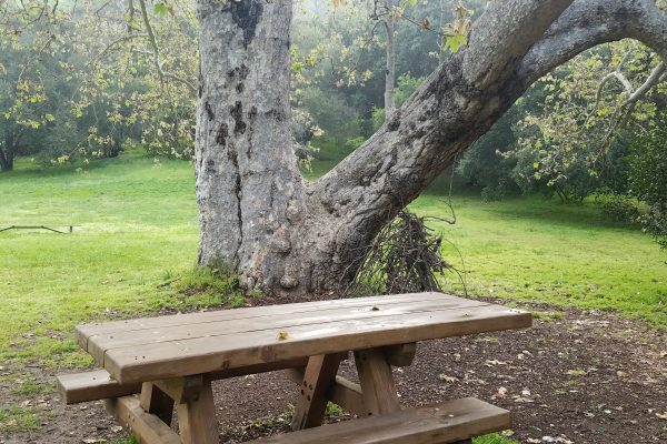 Judy Perez Soto_FC lowerranch picnic