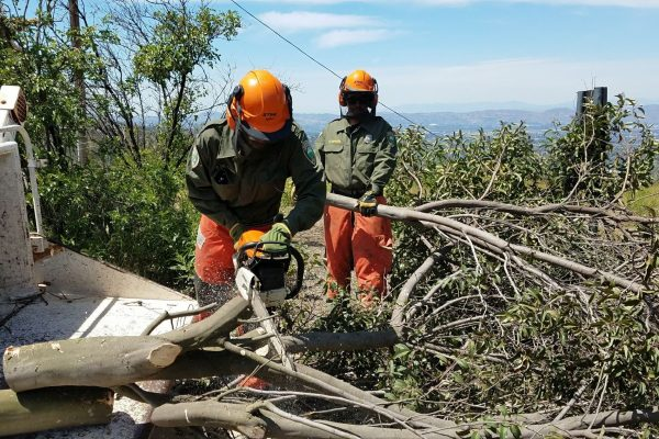 Brush Clearance at San Vicente Mountain Park